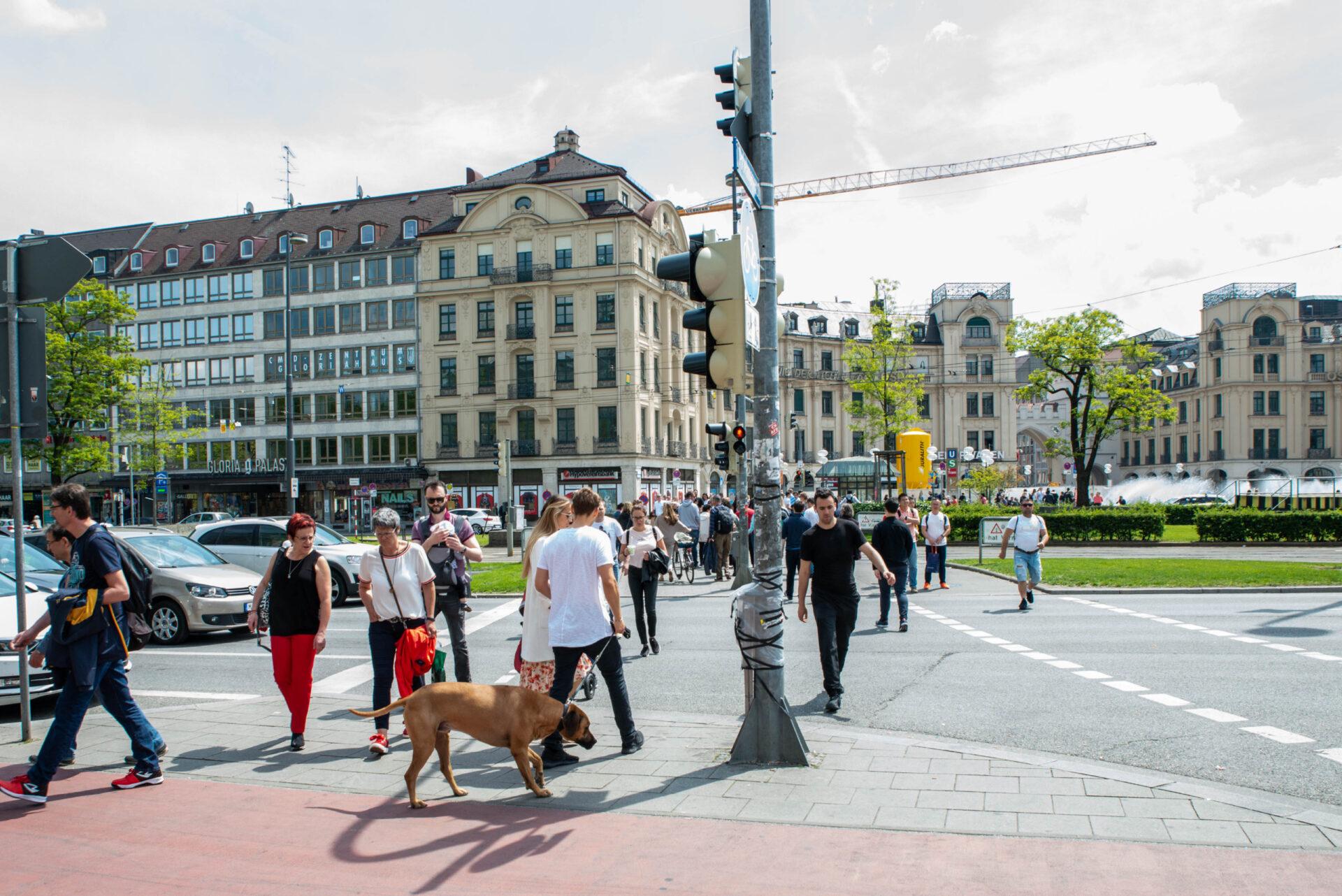 Собаки Мюнхена. 2019